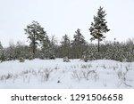 winter landscape in snowbounded ... | Shutterstock . vector #1291506658