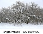 snowbounded oak trees in winter ... | Shutterstock . vector #1291506922