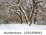 nice winter scene in forest in... | Shutterstock . vector #1291508062