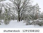 nice winter scene in forest | Shutterstock . vector #1291508182