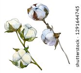 cotton floral botanical flower. ...   Shutterstock . vector #1291644745