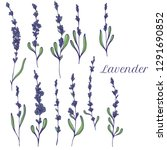 vector lavender hand drawn... | Shutterstock .eps vector #1291690852