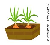 growing green onions at home....   Shutterstock .eps vector #1291793932