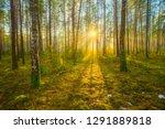 spring sunny morning. spring... | Shutterstock . vector #1291889818