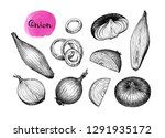 ink sketch of onion isolated on ... | Shutterstock .eps vector #1291935172