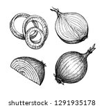 Ink Sketch Of Onion Isolated O...