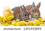 spring animals rabbits and... | Shutterstock . vector #1291953895