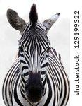zebra head | Shutterstock . vector #129199322