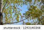 watching out for bird watchers | Shutterstock . vector #1292140348