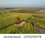 view from drone sugar cane... | Shutterstock . vector #1292250478