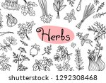background with various herbs... | Shutterstock .eps vector #1292308468