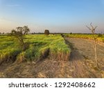 view from drone sugar cane... | Shutterstock . vector #1292408662