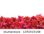 fall floral background with... | Shutterstock . vector #1292415148