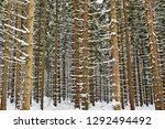 snowy trees in forest....   Shutterstock . vector #1292494492