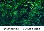 rainforest plants  lush foliage ... | Shutterstock . vector #1292554855