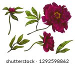 vector burgundy peony floral... | Shutterstock .eps vector #1292598862