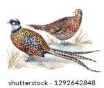 A Pair Of Royal Pheasants ...