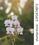 pink orchids that can be seen...   Shutterstock . vector #1292678872