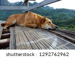 homeless dog looking out cliff  ... | Shutterstock . vector #1292762962