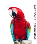 Colorful Parrot Isolated In...