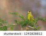 beautiful portrait of songbird... | Shutterstock . vector #1292828812