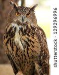 eagle owl an eagle owl | Shutterstock . vector #129296996