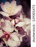 flowers of the cherry blossoms... | Shutterstock . vector #129301472