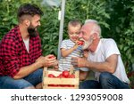 grandfather son and grandson... | Shutterstock . vector #1293059008
