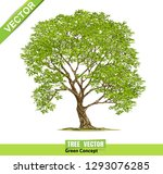 tree isolated on a white... | Shutterstock .eps vector #1293076285