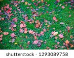 beautiful landscape with maple... | Shutterstock . vector #1293089758