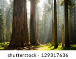 Kings Canyon   Sequoia Nationa...