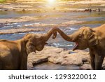 asia elephants trunk hugging... | Shutterstock . vector #1293220012