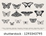 set butterflies. vector vintage ... | Shutterstock .eps vector #1293343795