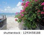 the beach  sky  white cloud ... | Shutterstock . vector #1293458188