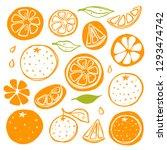 oranges set. whole  half ... | Shutterstock .eps vector #1293474742