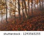 foggy forest. autumn sunrise in ... | Shutterstock . vector #1293565255