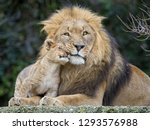Father And Daughter  Lion And...