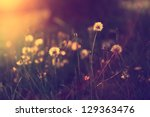vintage photo of dandelion... | Shutterstock . vector #129363476