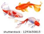 Set Of Koi Fish  On White...