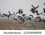 Migratory Bird In Korea