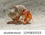 Hermit Crab On The Beach At...