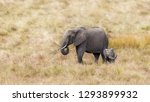 Stock photo african elephant mother and baby masa mara kenya 1293899932