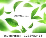 green leaves. leaves whirl in... | Shutterstock .eps vector #1293903415
