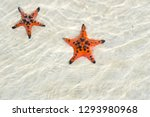 starfishes on the phu quoc... | Shutterstock . vector #1293980968
