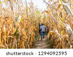Kids Running In Corn Maze In...
