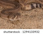 Small photo of Western Diamondback rattlesnake, crotalus atrox with aberrant skin pattern photographed in a private collection