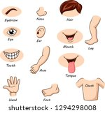 human body parts collection set | Shutterstock .eps vector #1294298008