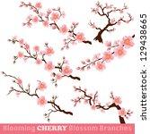 blooming cherry blossom... | Shutterstock .eps vector #129438665