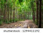 unique perspective through a... | Shutterstock . vector #1294411192