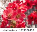 Beautiful Sunlit Flowering Pin...